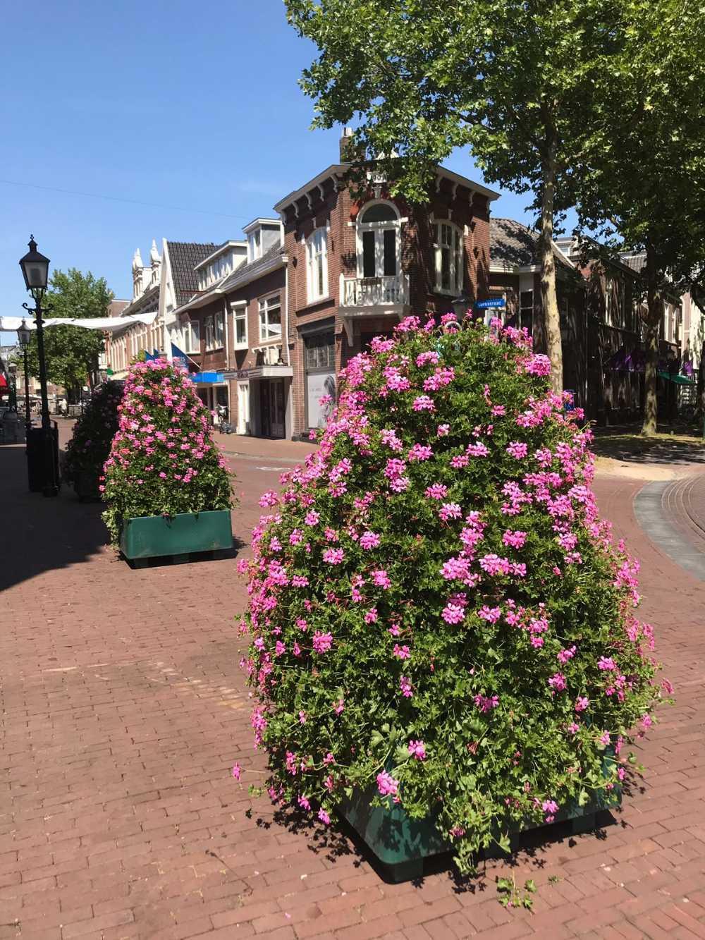 Kleurrijke bloembakken